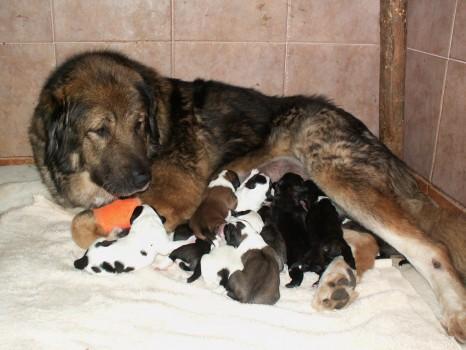 štěňata - puppies